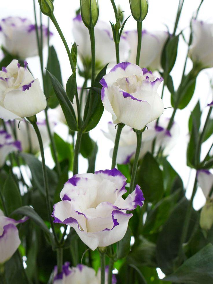 die 25 besten ideen zu lilafarbene hochzeitsblumen auf. Black Bedroom Furniture Sets. Home Design Ideas