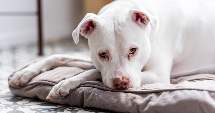 Aspca Files Lawsuit After U S Hud Denies Fee Waived Information Request Aspca Animal Stories Cat Help