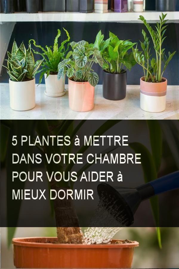 5 plantes mettre dans votre chambre pour vous aider mieux dormir astuces maison diy. Black Bedroom Furniture Sets. Home Design Ideas