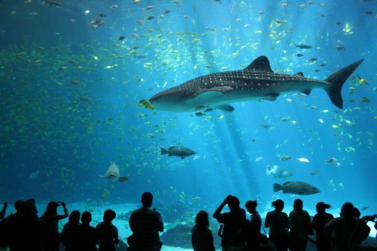 J'apercevrai les requins dans le aqarium en Géorgie.