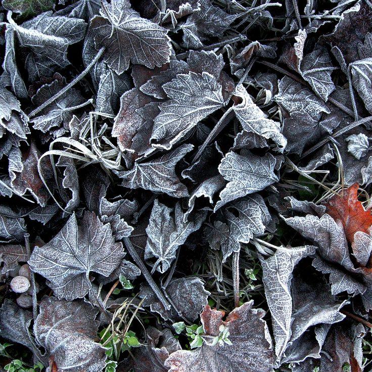 #Autumn sensations from #Piedmont. Monferrato: discover it. Sensazioni d'#autunno dal #Piemonte. Il Monferrato: un luogo da scoprire.