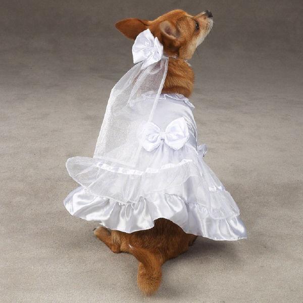 East Side Collection Yappily Ever After Dog Wedding Dress - The 25+ Best Dog Wedding Dress Ideas On Pinterest Dog Wedding