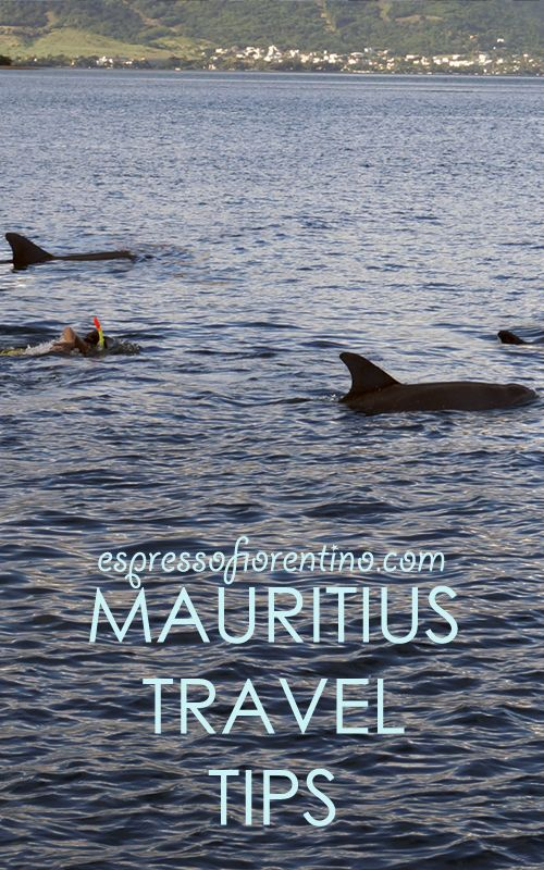 Swimming with wild dolphins in Mauritius: an amazing experience! More travel tips: www.espressofiorentino.com