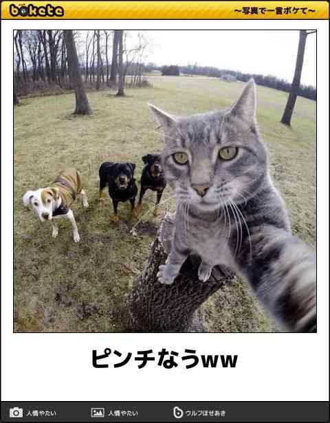 【かわいいボケてをご覧ください】 【猫ボケて特集】おもしろネコだけの笑える「bokete」画像50選 – ペットライフ