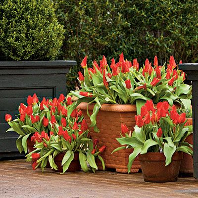 How To Plant Bulbs in Containers | Planting bulbs in containers in the fall will give you a sunny show for spring. | SouthernLiving.com