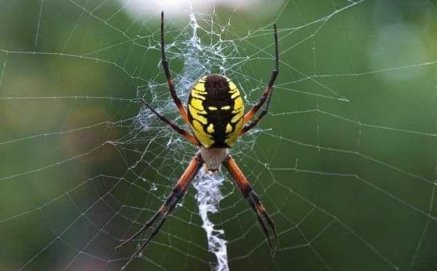 بعض المشاعر لها اعمار افتراضية إن لم تستخدم يطولها الاهتراء وتلتهمها عناكب الذكريات Vegetable Garden Planning Garden Pests Spider