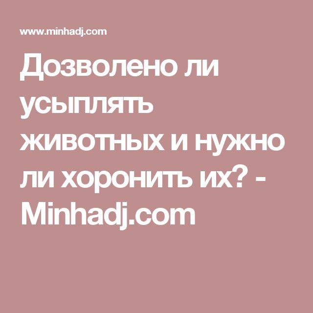 Дозволено ли усыплять животных и нужно ли хоронить их? - Minhadj.com