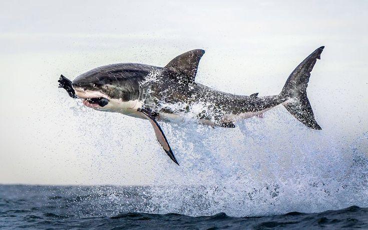 #sharks #sea