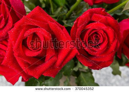 closeup view of bunch of red rose