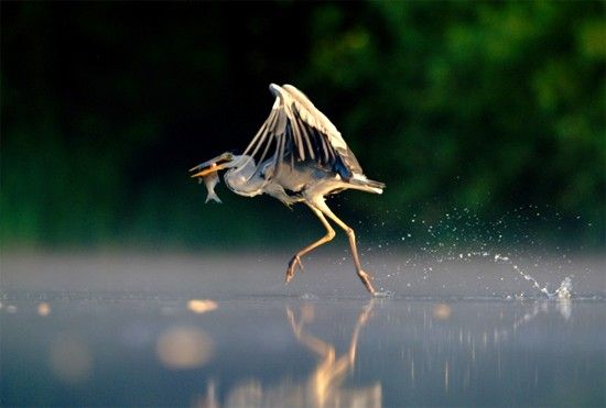 British Wildlife Photographer of the Year 2011. Author: Andrew Parkinson