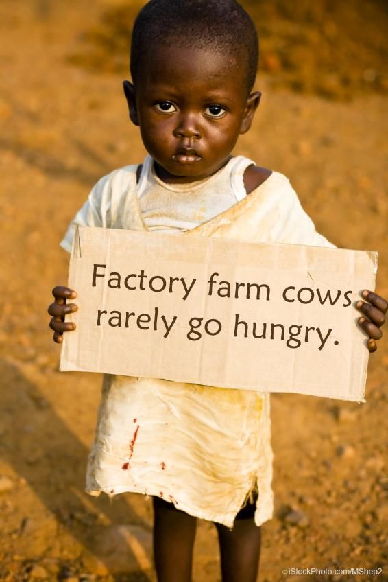 It takes 16 pounds of grain to produce just 1 pound of meat. Feed people, not cows. Less Meat = Less Hunger
