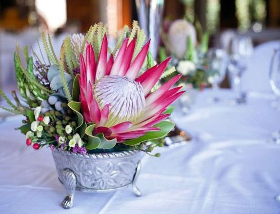 The main attraction king protea protea cynaroides for King protea flower arrangements