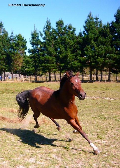 Sarah Thrasher - Element Horsemanship
