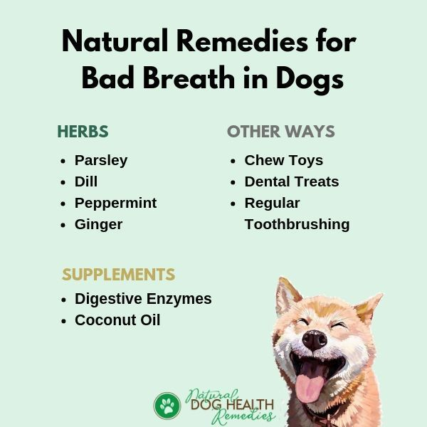 Dog Has Bad Breath Try These Natural Remedies Dogcare Doghealth Dog Bad Breath Remedy Bad Breath Bad Dog Breath