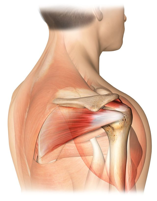 Is Surgery Always Necessary for Shoulder Bursitis?: The rotator cuff muscles and tendons surround the shoulder joint.