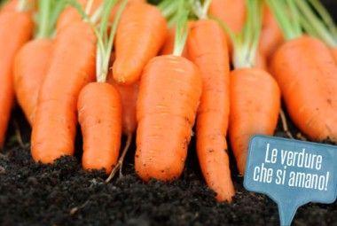 Orto in vaso e nel giardino: le consociazioni degli ortaggi da coltivare! | Giardinieri in affitto