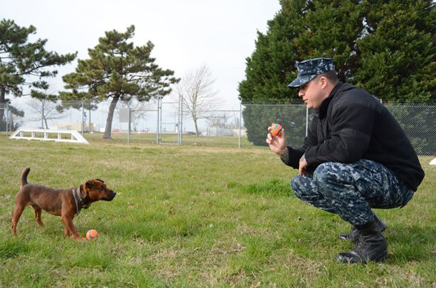 Puskos is a 15-pound powerhouse who patrols for drugs at Naval Station Norfolk, the world's largest naval base.