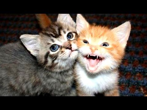 Top 10 cute kitten videos compilation - YouTube