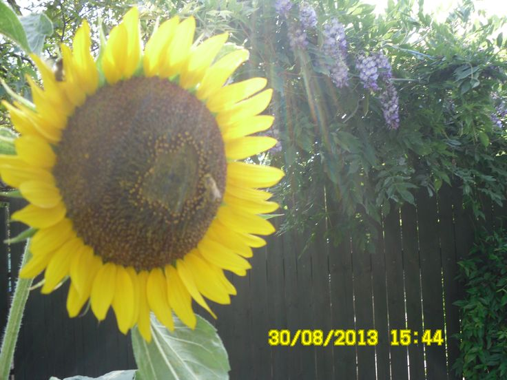 paprsky sluníčka