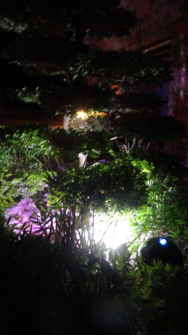 jardin nuit