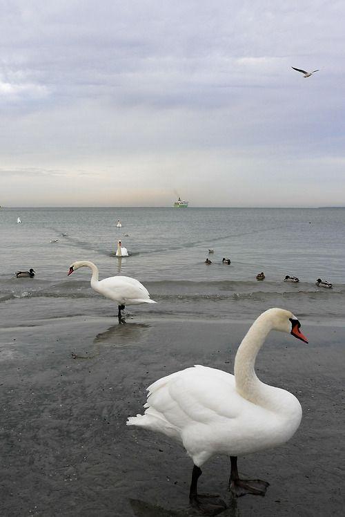 Baltic Sea, Tallinn, Estonia