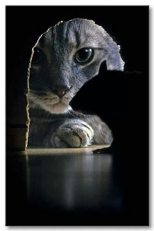Tom & Jerry...lol