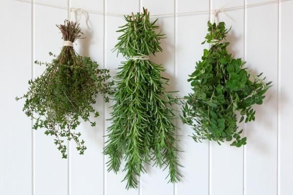 jak konserwować zioła