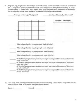 Genetics: Dihybrid (Two Factor) Practice Problem Worksheet ...