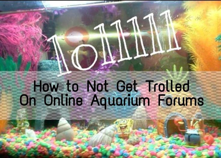 A simple guide to how to avoid getting torn to shreds on an aquarium forum / online. #aquariumhobby #aquarium #onlinetrolls #aquariumforum #aquariumtips #aquariumblogger #howto #diyaquarium #cory #betta #spongebob #aquariumnewb #beginneraquarium