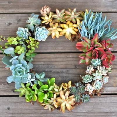 How to make a succulent wreath.