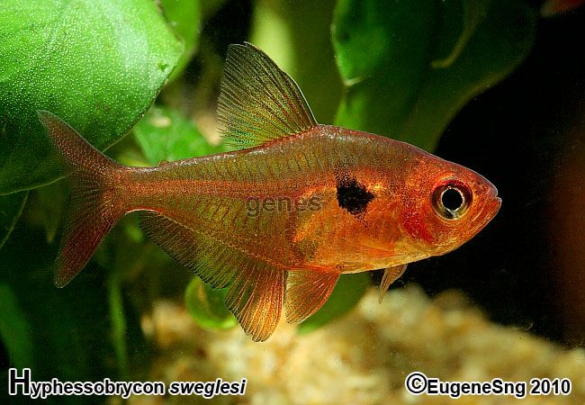 760 Best Images About Fishes Tropical Fishes On