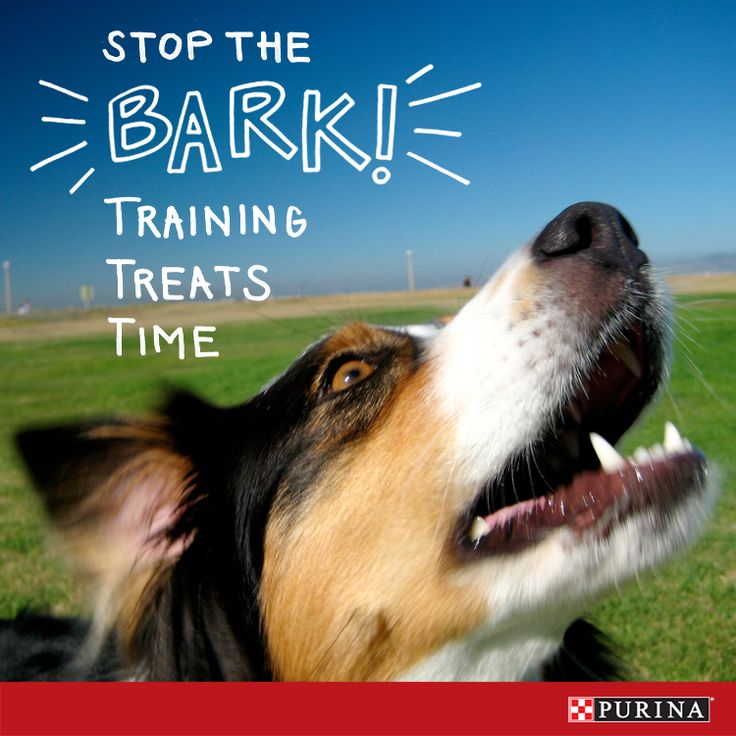 Having trouble with a barking dog? Barking is how our dogs communicate with us, but these tips can help you manage excessive barking.
