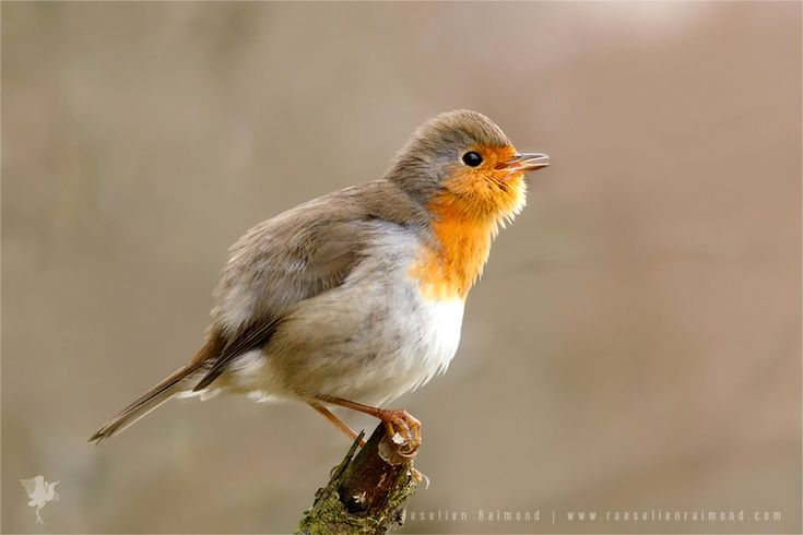 Robin by thrumyeye on DeviantArt