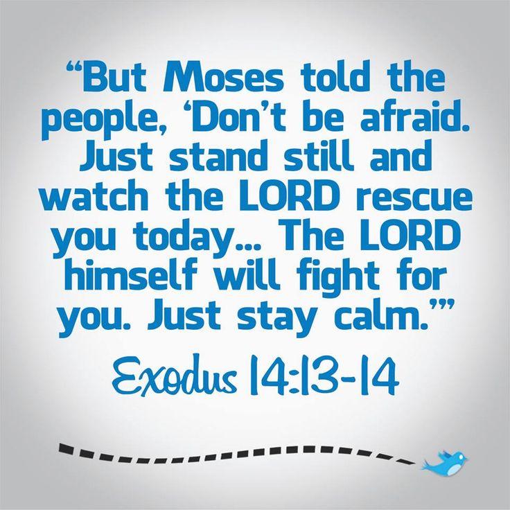 bible verse exodus 14 13 14 bible verses pinterest