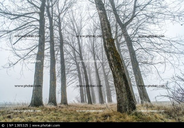 http://www.photaki.com/picture-trees-in-the-mist_1385325.htm