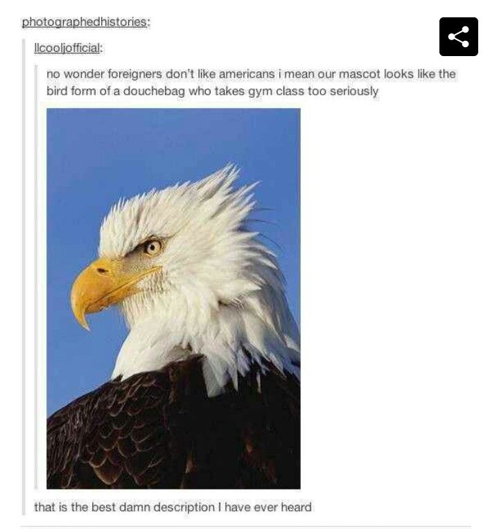That is the best description of a bald eagle ever to be proclaimed.