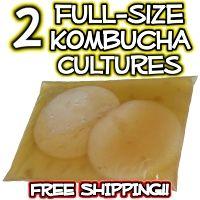 Buy Kombucha Mushroom Culture with FREE SHIPPING by Kombucha Kamp for Delicious Homemade Kombucha Mushroom Tea