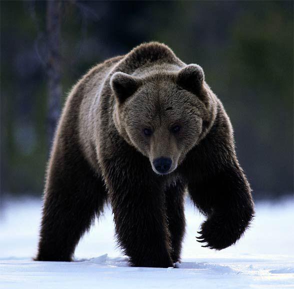 770 besten Wild animals in Poland Bilder auf Pinterest | Polen ...