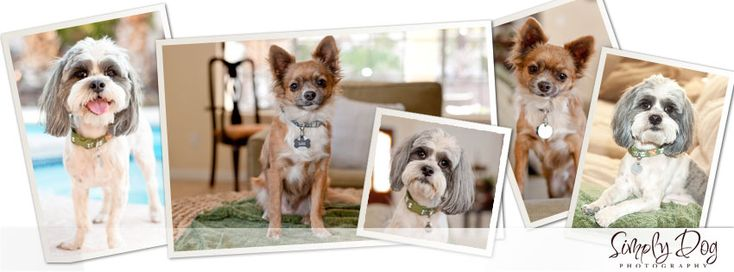 tips for better pet photography