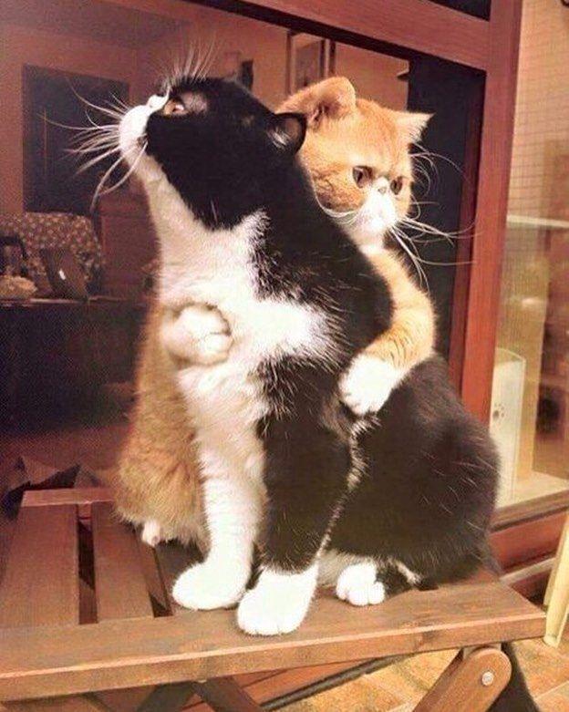 hugs! by caturdaymornings