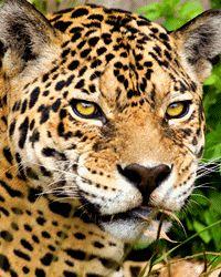 Help Send Scientists to Study and Protect the Sierra el Tigre Read more at http://greatergood.com/?utm_source=CTGtabs&utm_medium=TabLink&utm_campaign=TabBar#bDjPmacjtzhlIka7.99
