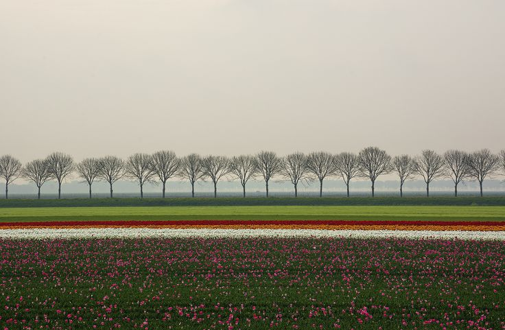 Tulip fields in Holland by Andrea Mottarella on 500px: