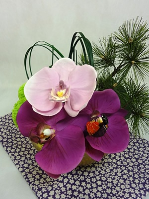 $290.00  Pink Moth Orchid