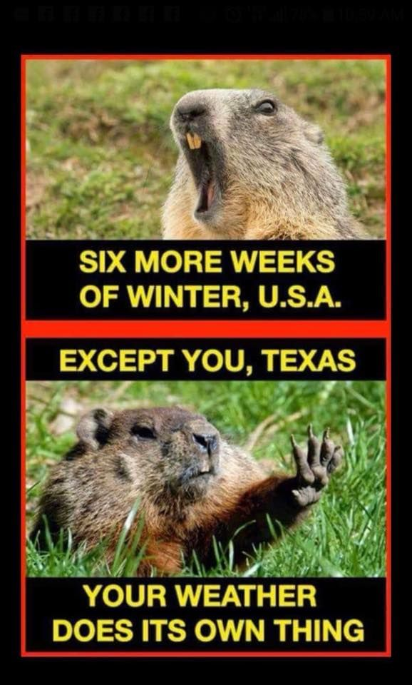 So True!! #Texas #Meme #TexasWeather #GroundhogDay | Texas humor, Only in  texas, Texas weather