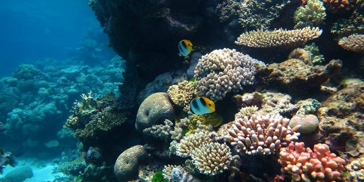David Attenborough Warns Great Barrier Reef Will be Dead by 2100, But Could Veganism Save It?