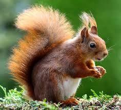Výsledok vyhľadávania obrázkov pre dopyt zvierata v lese