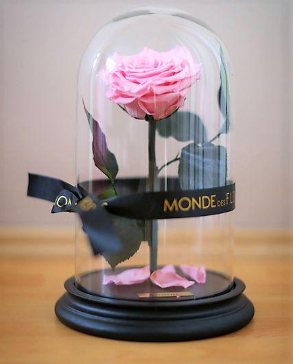 10 besten infinity rose la belle rose von die sch ne. Black Bedroom Furniture Sets. Home Design Ideas