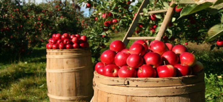 В Жамбылской области развивается интенсивное садоводство ...