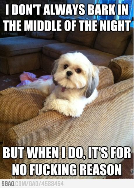 hahahaha: Laughing, Funny Pics, Small Dogs, Interesting Dogs, Giggles, So True, Funny Stuff, Baby Dogs, Animal