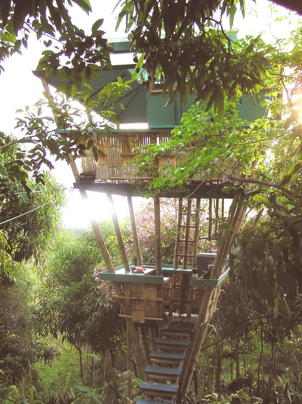 a tree house for rent in Puerto Rico